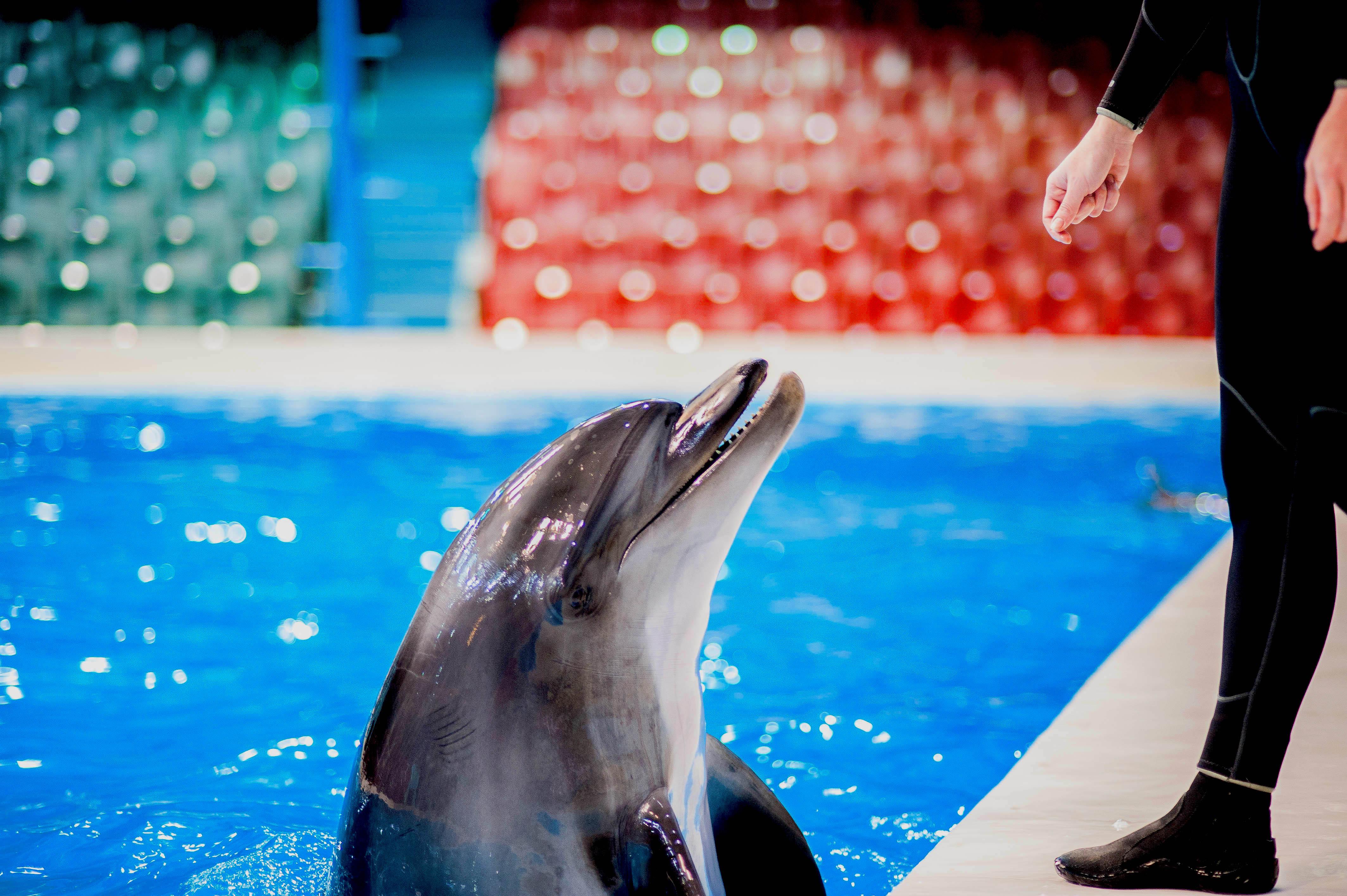 dubai dolphinarium tickets dolphin and seal show