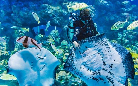 001 Cairns: Wildlife & Aquarium - cairns
