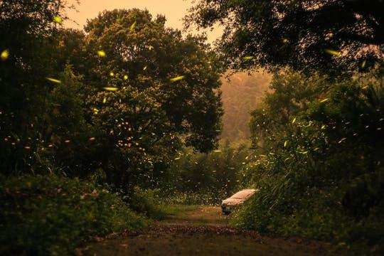 008 Kuala Lumpur: Kampung Kuantan Fireflies Park - kuala lumpur