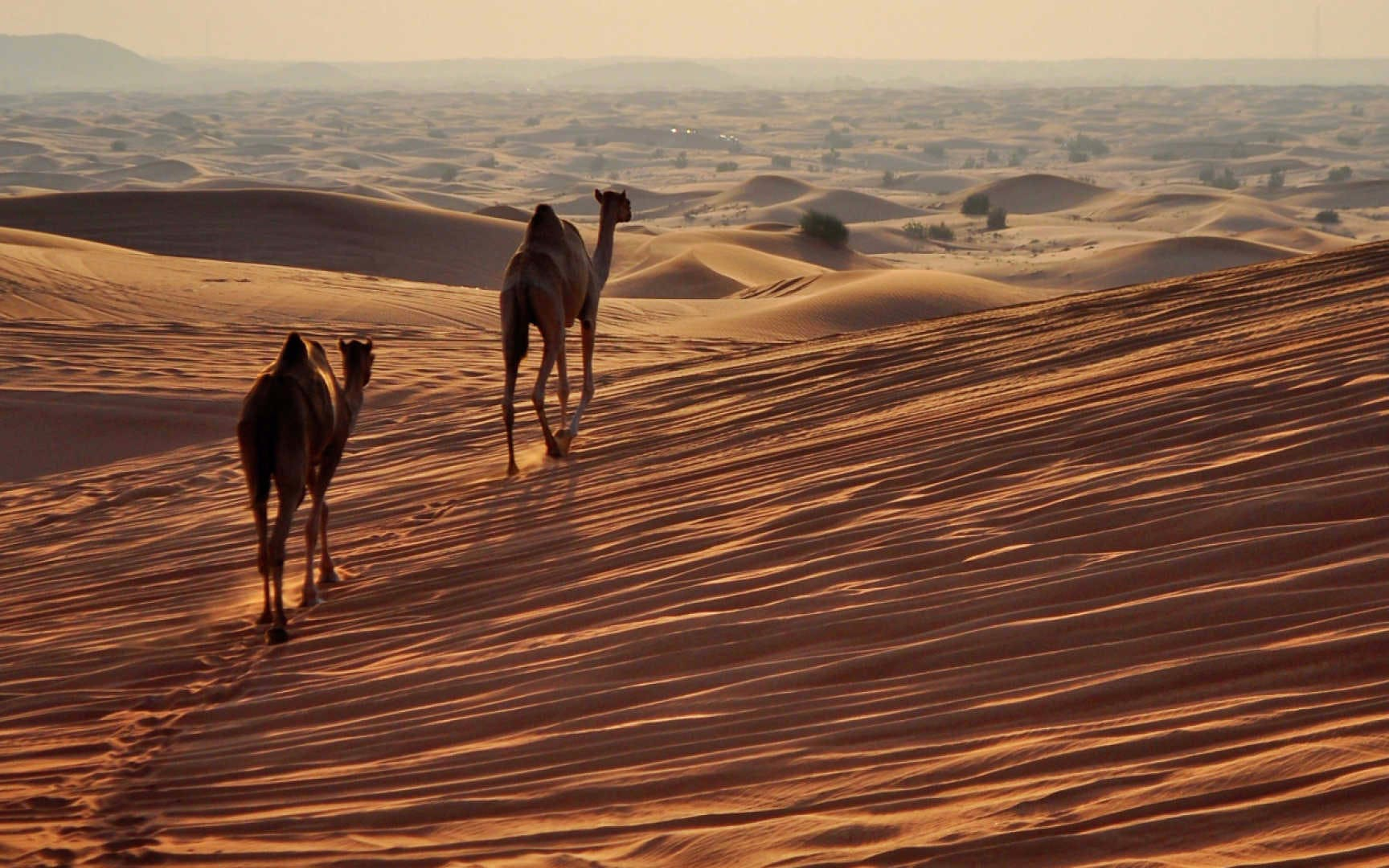 luxury desert safari in al khaimah-3