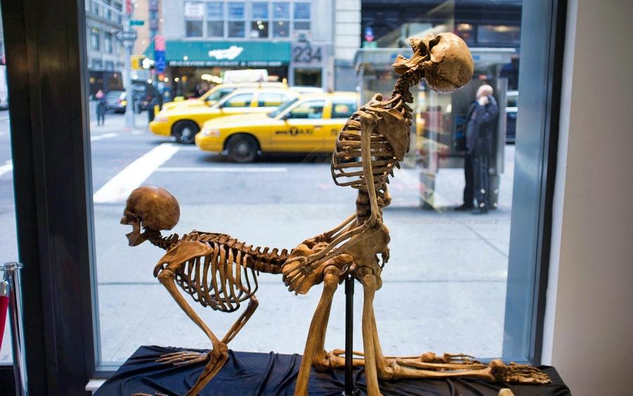 Скелет прикольная картинка, равиной