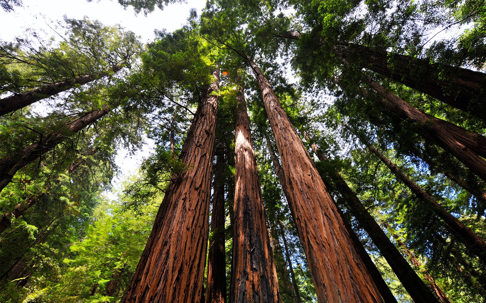 California Coast and Redwoods Tour