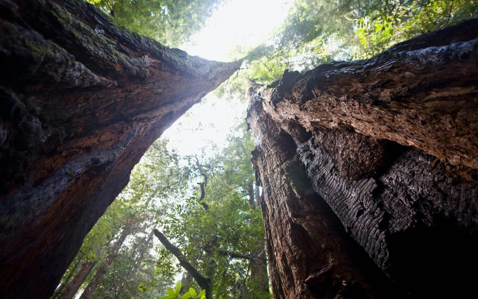 Muir Woods VIP Tour