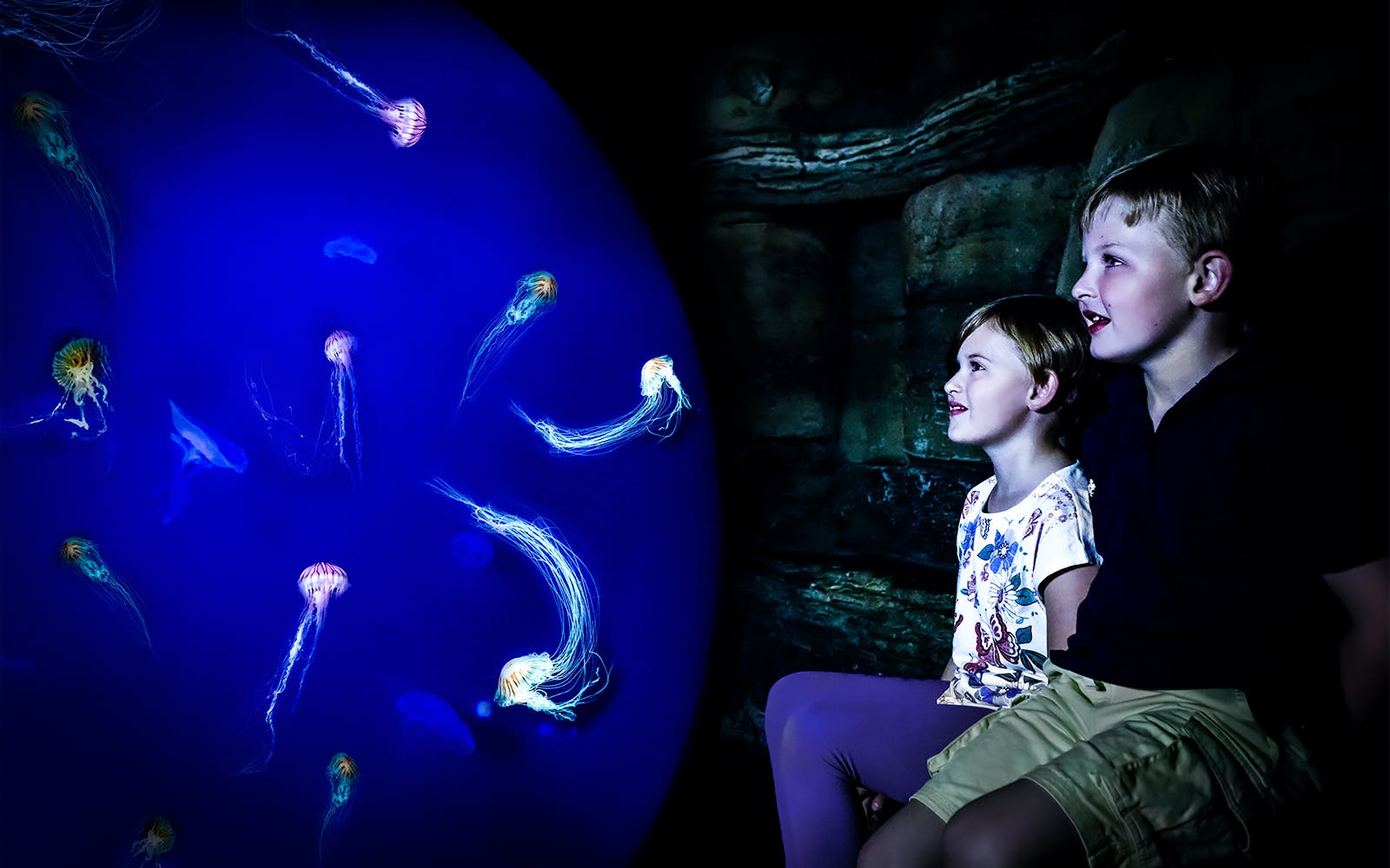 sea life tickets and 24 hours thames river cruise combo-3
