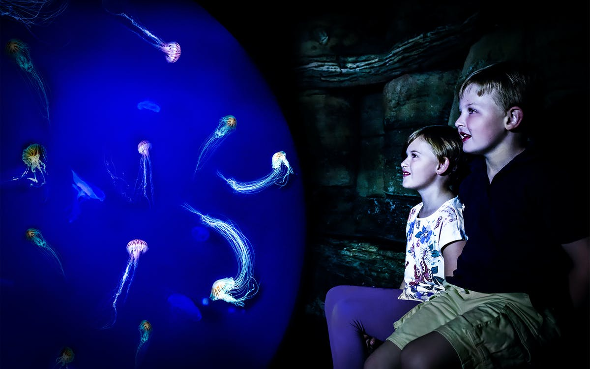 sea life ticket with 24 hours unlimited thames river cruise-3