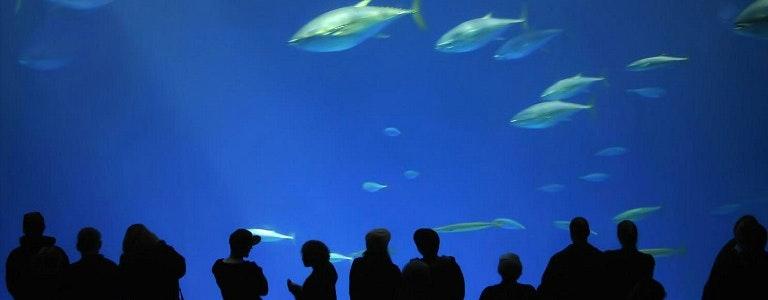 Aquarium Of The Bay San Francisco Tickets Tours Deals Headout