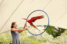 Singapore itineraries - Jurong Bird Park - 3