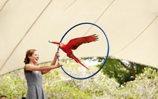 Jurong Bird Park Singapore - 5 day Singapore itinerary