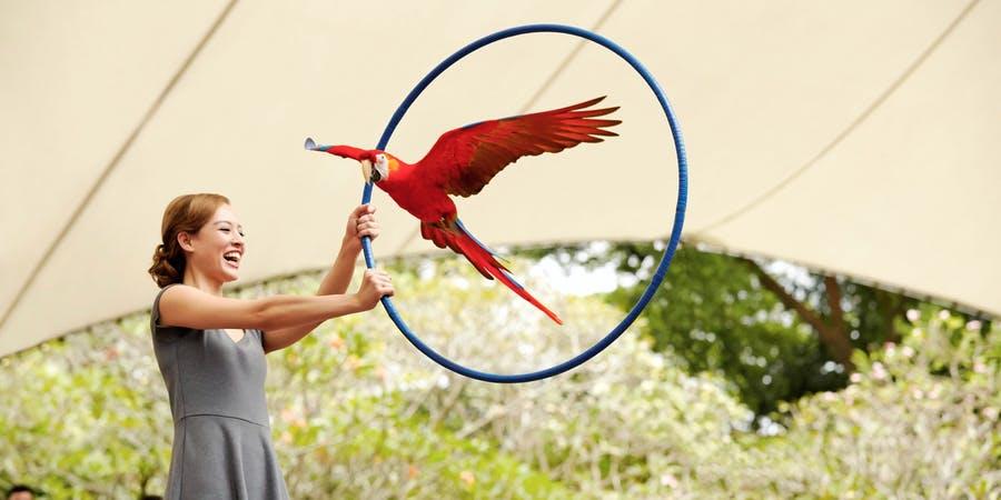 Singapore in October - jurong bird park