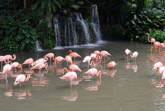 Jurong Bird Park singapore-2