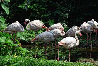 singapore zoo-2