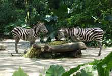 singapore zoo-3