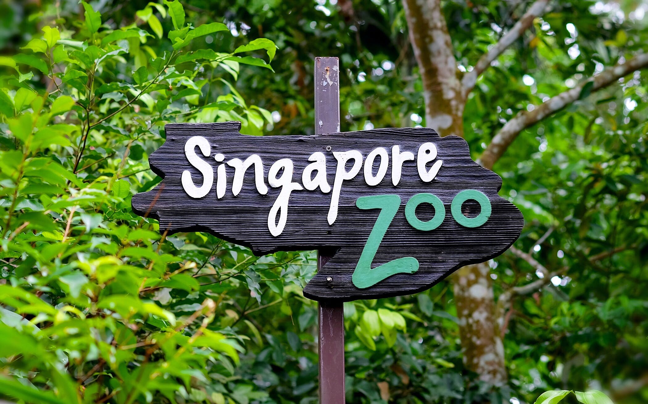 Zoo di Singapore con Giro in Tram