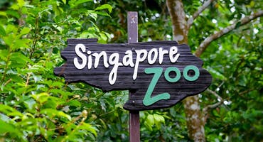 Singapore Zoo Tickets with Tram Ride