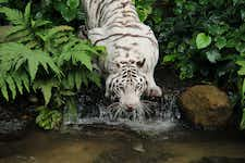 Best Things to do in Singapore - Singapore Zoo - 2
