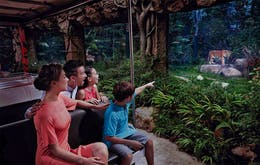 Night Safari - 5 day Singapore itinerary