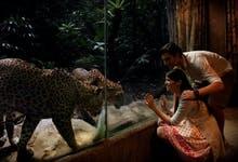 Night Safari singapore-3