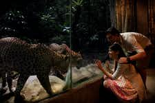Best Things to do in Singapore - Singapore Zoo & Night Safari - 3