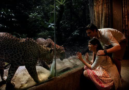 Singapore Night Safari Tickets with Hotel transfers