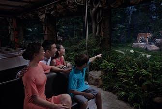 Night Safari singapore-2
