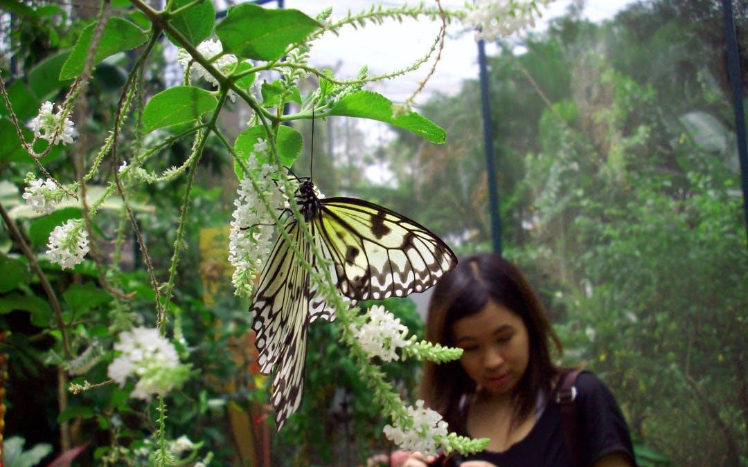 Book Sentosa Island Butterfly Park Tickets [2021 Update]   Headout