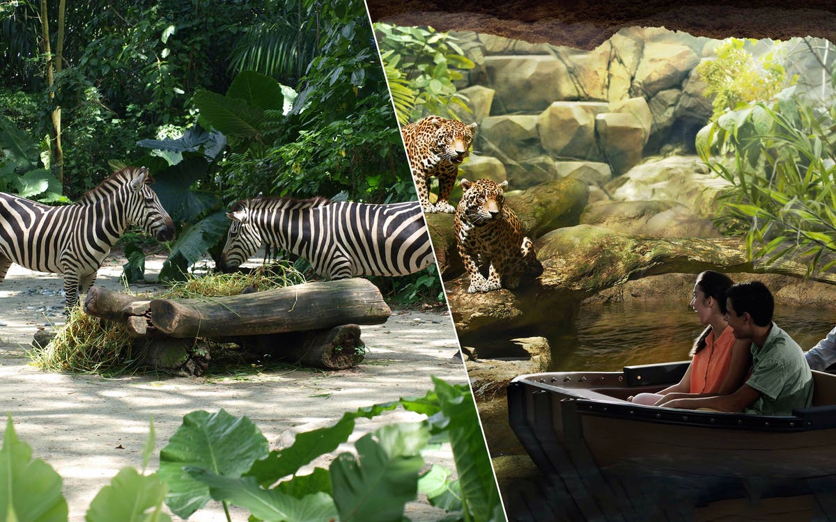 super saver combo: singapore zoo + river safari-1