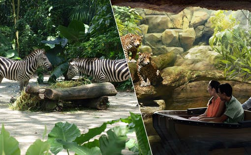 Super Saver Combo: Singapore Zoo + River Safari