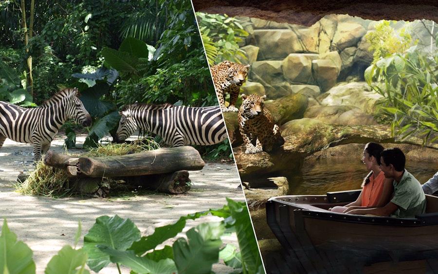super saver combo singapore zoo river safari. Black Bedroom Furniture Sets. Home Design Ideas