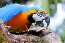 Singapore itineraries - Jurong Bird Park - 2