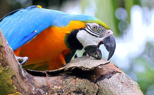 Jurong Bird Park with Hotel Transfers