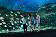 Best Things to do in Singapore -S.E.A. Aquarium - 2