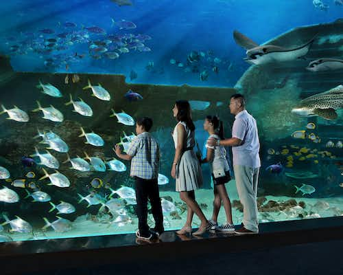 Sinpore Deals & Offers - S.E.A. Aquarium