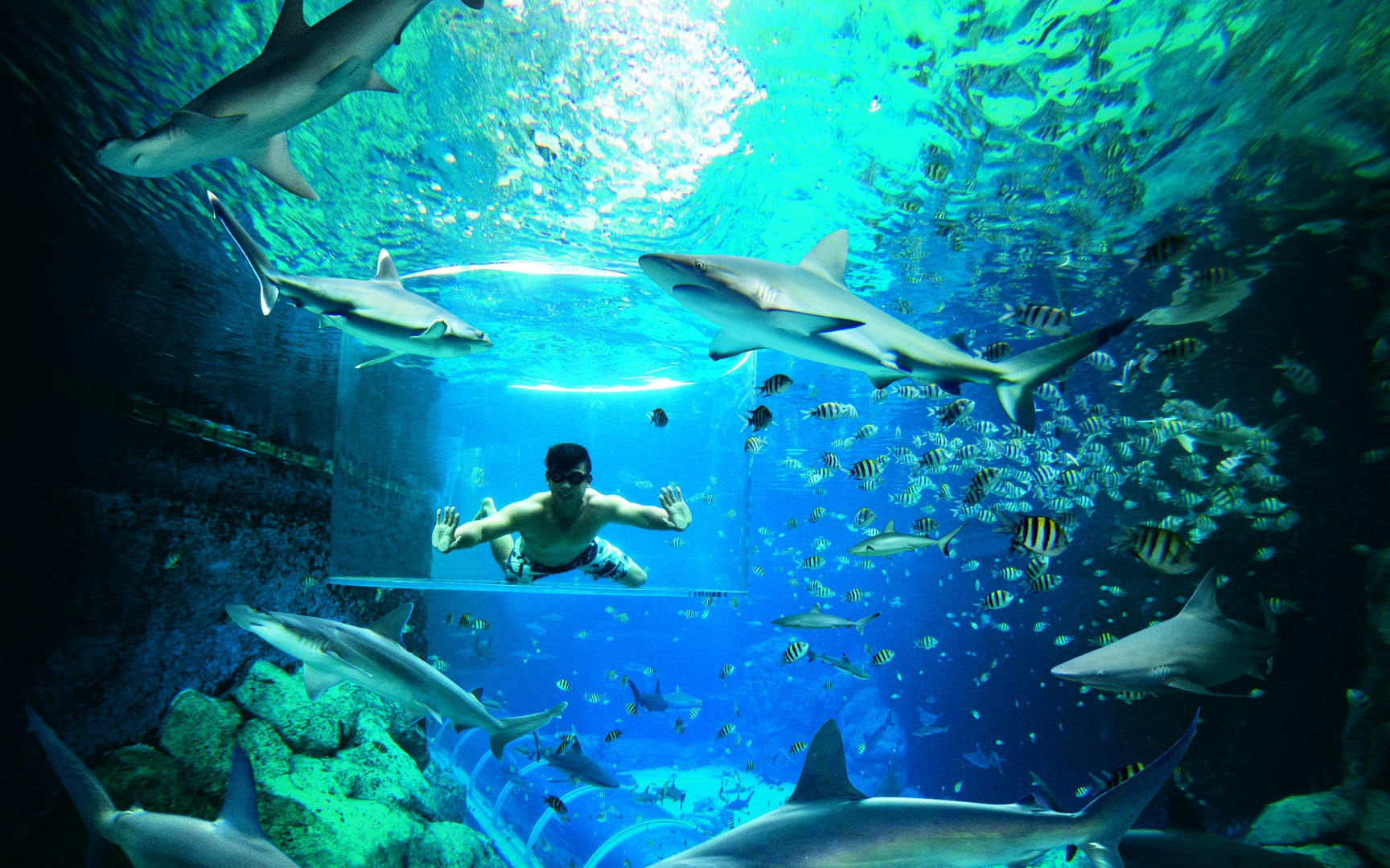Shark Encounter with Adventure Cove Waterpark Tickets