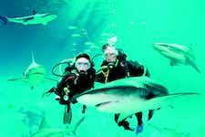 Best Things to do in Singapore - Shark Dive - Sentosa - 1
