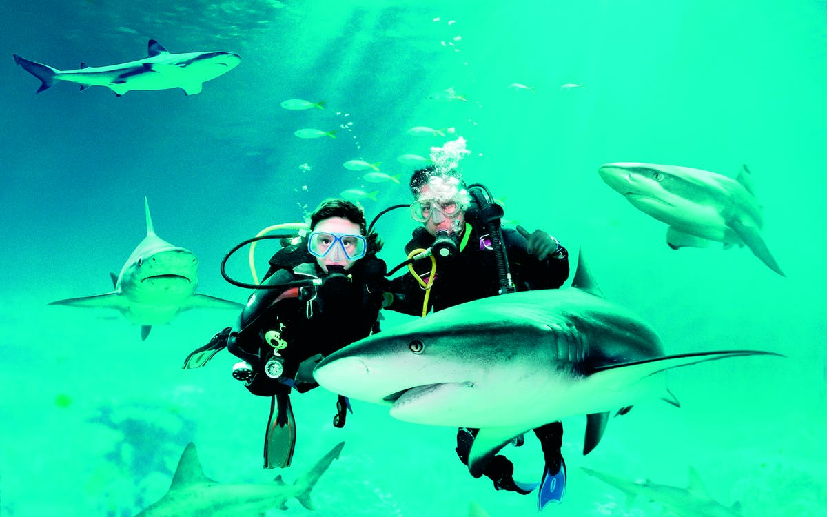 shark dive with adventure cove waterpark tickets-1