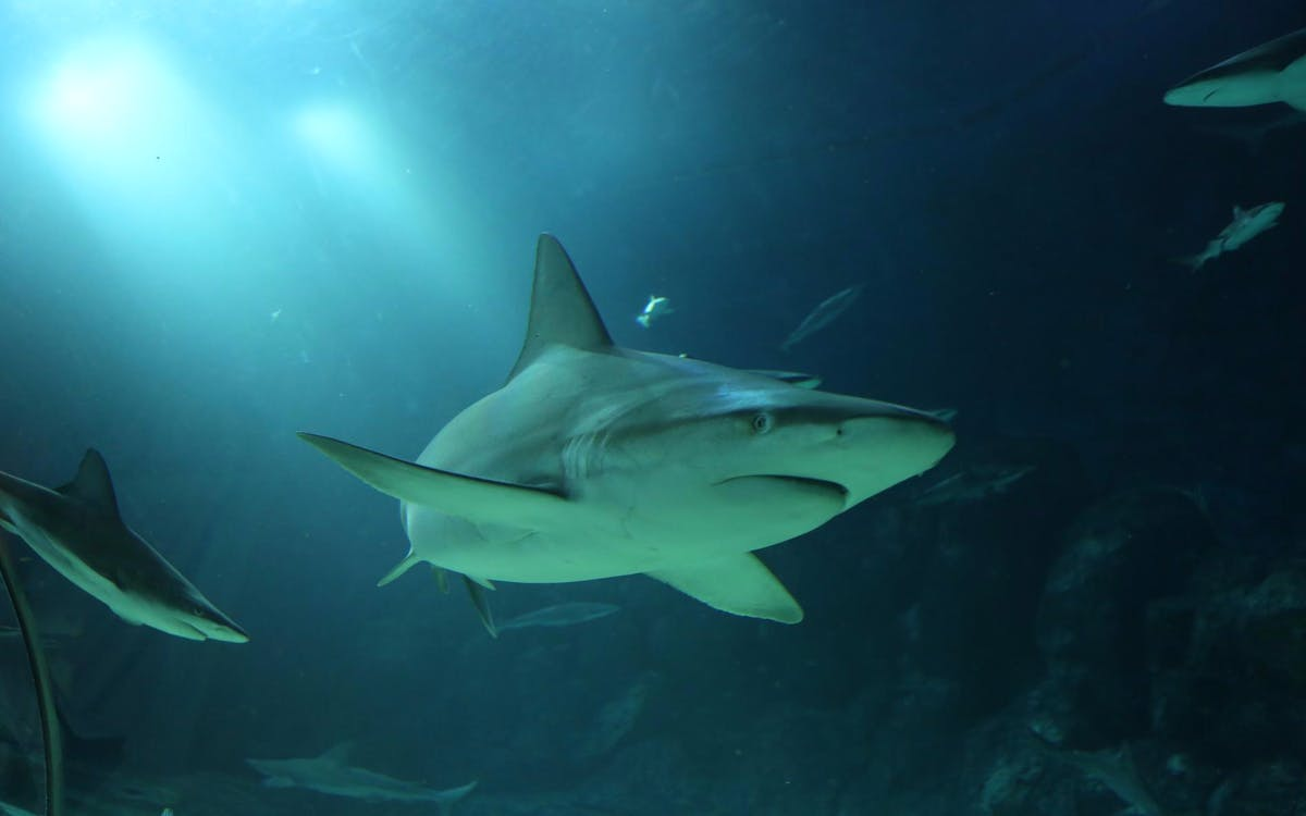 shark dive with adventure cove waterpark tickets-2