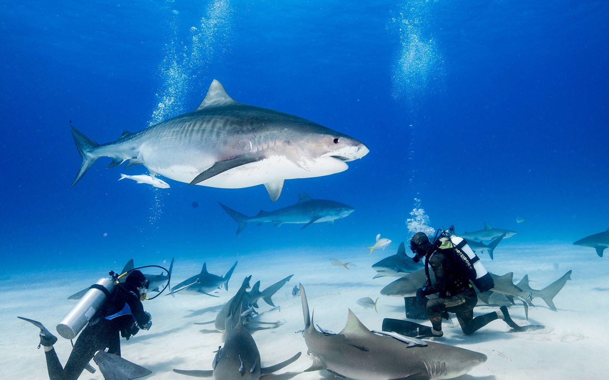 shark dive with adventure cove waterpark tickets-3