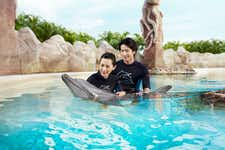Best Things to do in Singapore - Dolphin Discovery - Sentosa - 1
