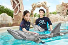 Best Things to do in Singapore - Dolphin Discovery - Sentosa - 3