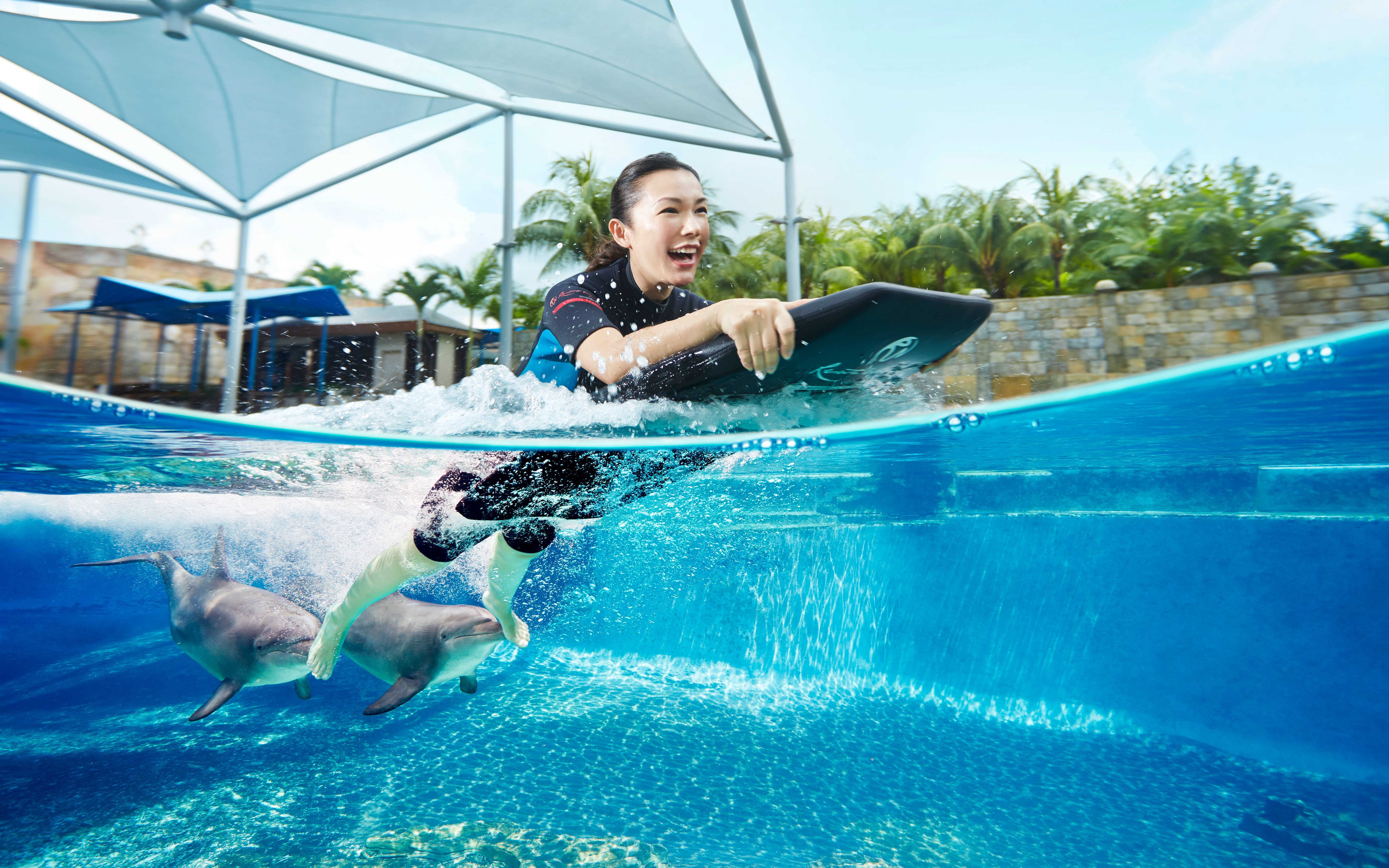 Dolphin Adventure Experience with Adventure Cove Waterpark Tickets