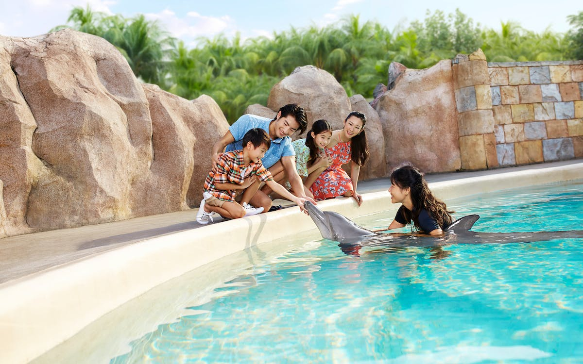 dolphin adventure experience with adventure cove waterpark tickets-1
