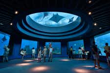 Best Things to do in Singapore -S.E.A. Aquarium - 3