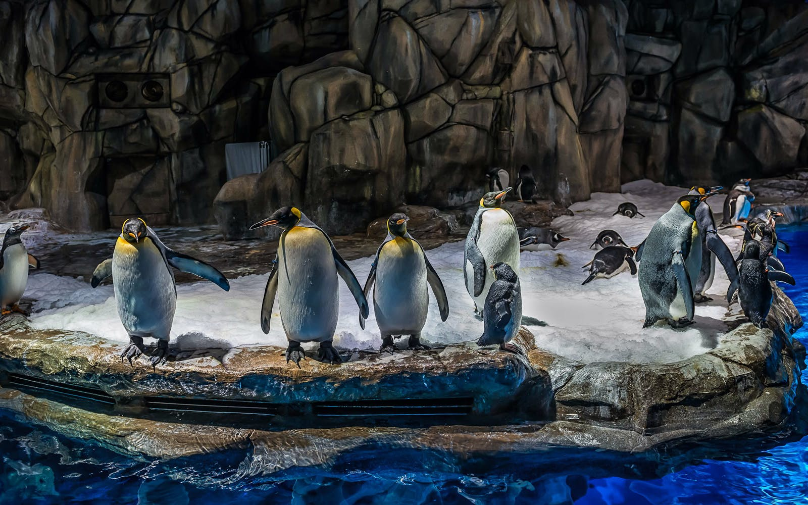 Ocean Park Penguin Encounter