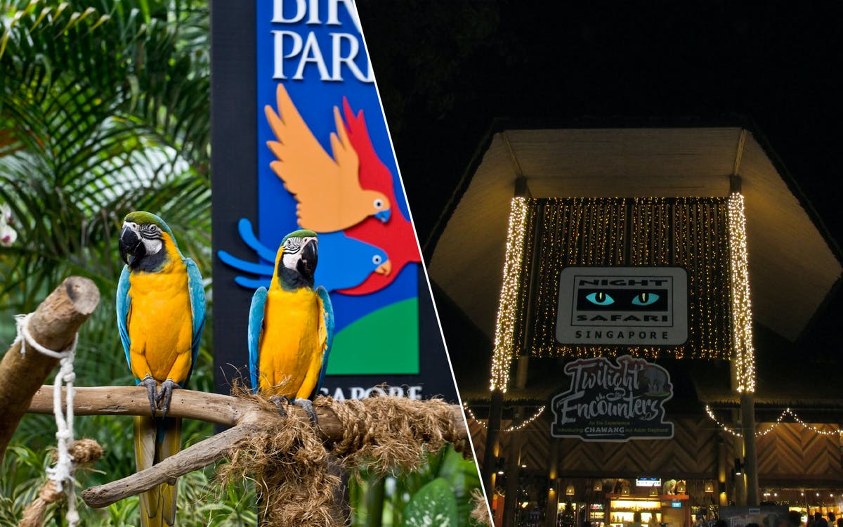 super saver combo: jurong bird park + night safari-1