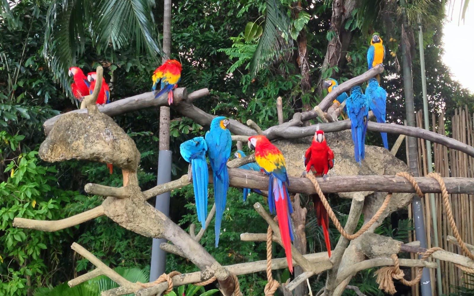 river safari jurong bird park