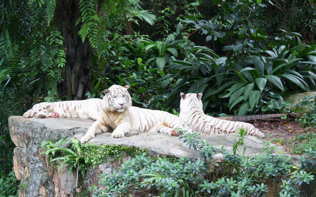 super saver combo: jurong bird park + singapore zoo-3