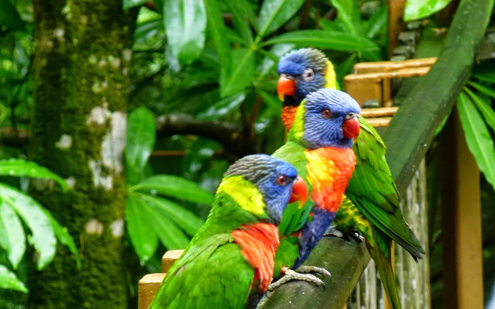 jurong bird park singapore zoo tickets