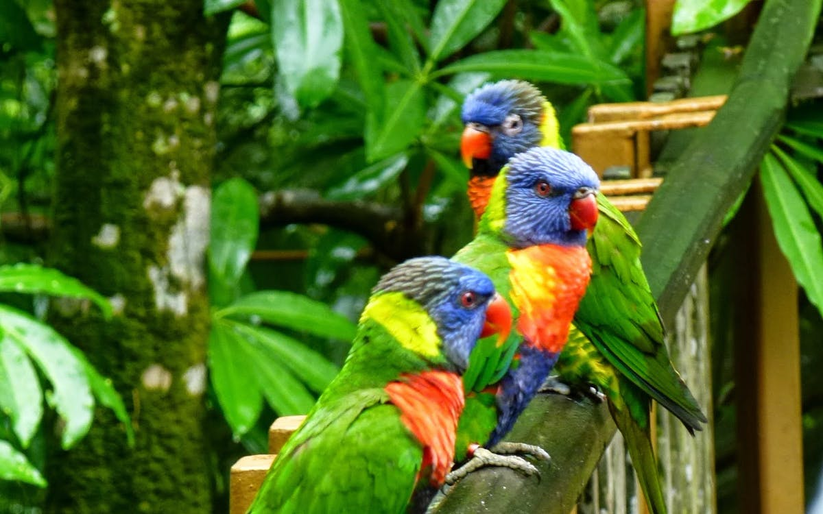 super saver combo: jurong bird park + singapore zoo-2
