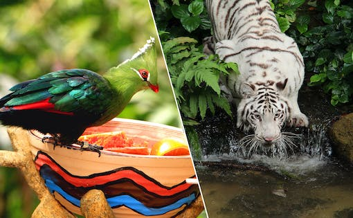 Super Saver Combo: Jurong Bird Park + Singapore Zoo