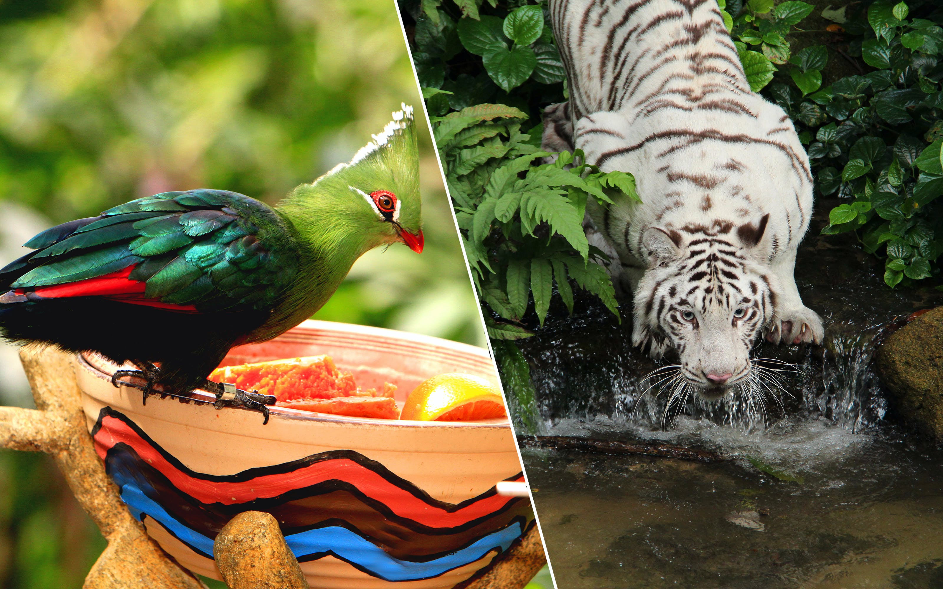 Park Hopper: Singapore Zoo + River Safari + Night Safari + Jurong Bird Park